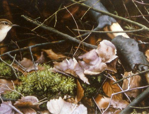 Winterkoning 2002